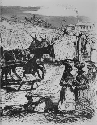 Travaux dans les champs de canne