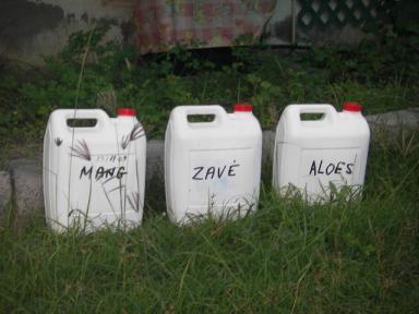 Insecticides naturels à base de végétaux endogènes