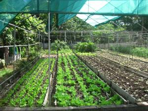 Jardin biologique de Tonton Fernand
