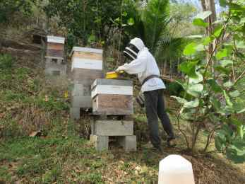 Philippe et ses ruches