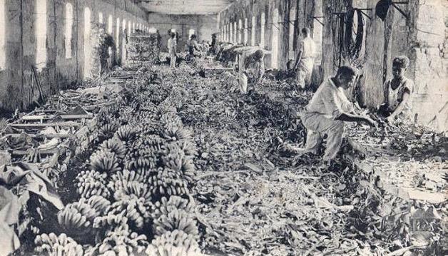 Emballage de bananes en Guadeloupe