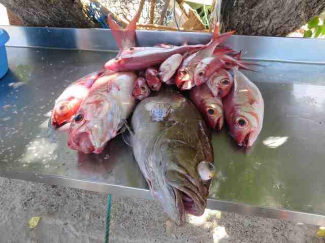 Marché aux poissons de Terre-de-Haut - Ph. R. Joyeux