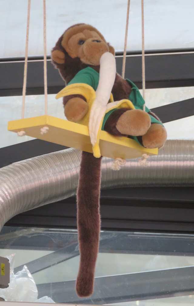 Pour rire : ce petit singe du T . Ph R.Joyeux