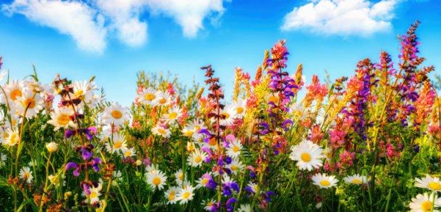 focus-fleurs-bach